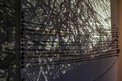 Bruno Bouchard / Vitrine en cours