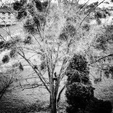 Accrobranche, Parc St Cyr, Rennes